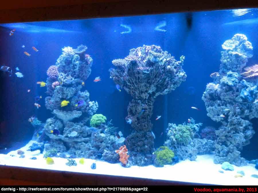 Морской-аквариум-5-4