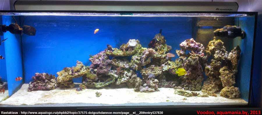 Морской-аквариум-6-1