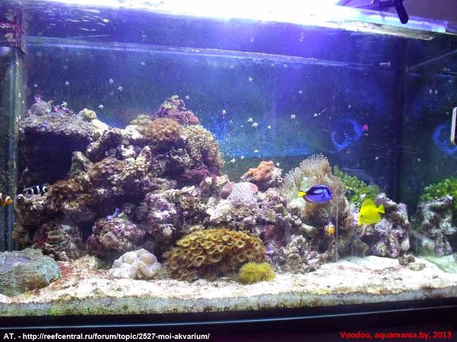 Морской-аквариум-6-2