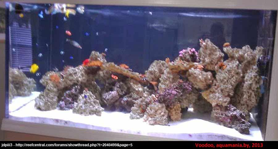 Морской-аквариум-6-3