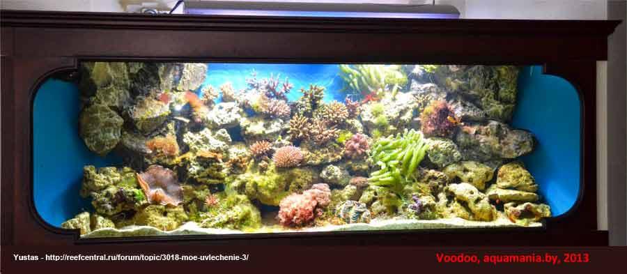 Морской-аквариум-7-2