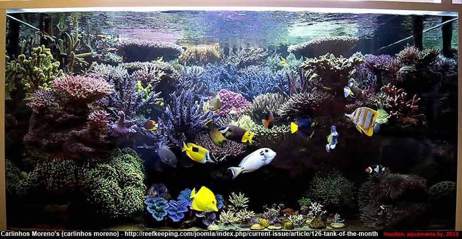 Морской-аквариум-7-3