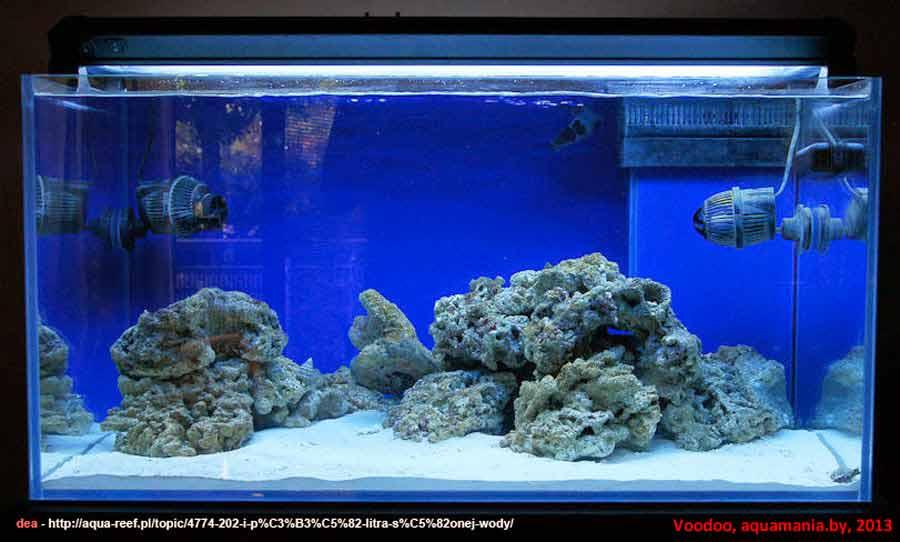 Морской-аквариум-8-1