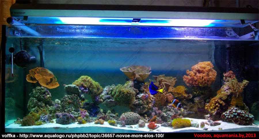 Морской-аквариум-9-1