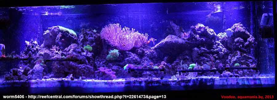 Морской-аквариум-9-2